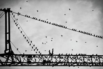 birds-on-a-crane